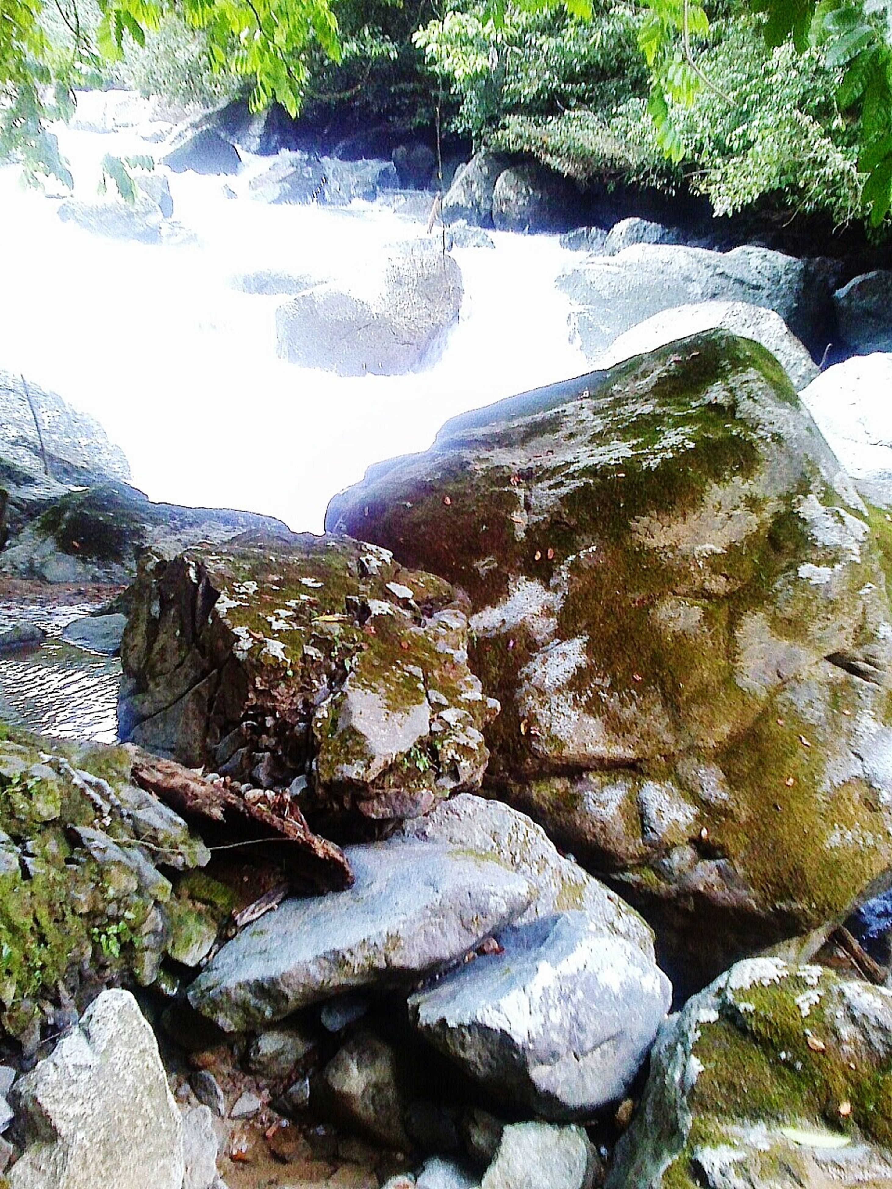 water, rock - object, tree, nature, beauty in nature, tranquility, flowing water, scenics, stream, forest, tranquil scene, river, growth, flowing, day, rock, stone - object, outdoors, no people, idyllic