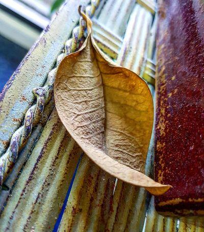 Close-up Indoors  Nature Day Indoor Plants Leaf Dried Leaf