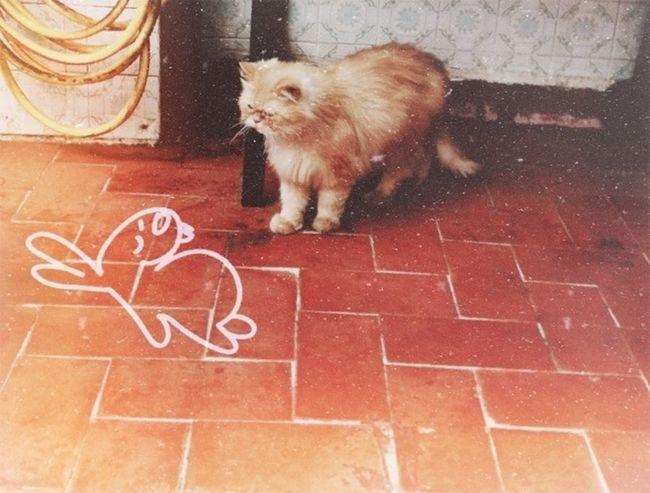 Cat Animals Eye4photography  EyeEm Best Shots