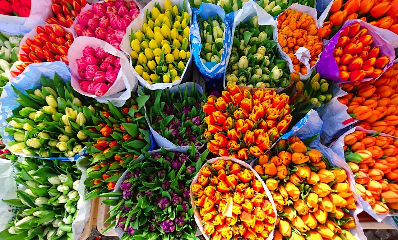 Flower Multi Colored For Sale Choice Freshness Market Stall Market Abundance Flower Market Nature Beauty In Nature Spring Has Arrived Spring Into Spring Spring Flowers Colors