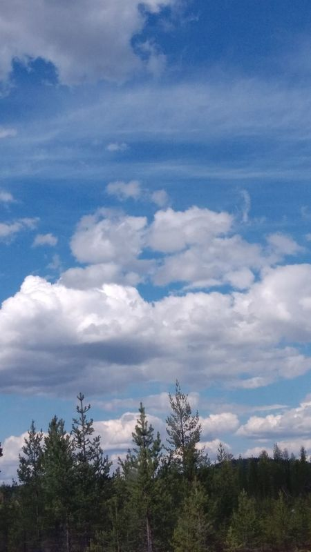 Tree Cloud - Sky Sky Forest Pine Tree Blue Nature Scenics Landscape Day Beauty In Nature Outdoors Sweden Fantastic Landscape
