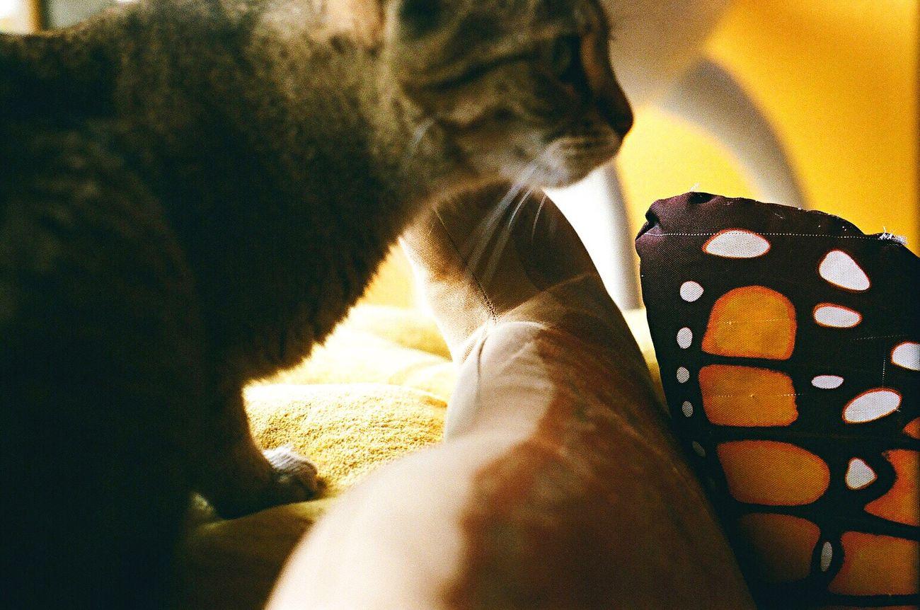 Koduckgirl Domestic Cat Pets Indoors  Close-up Cat Zenit122 Lomo400 Film