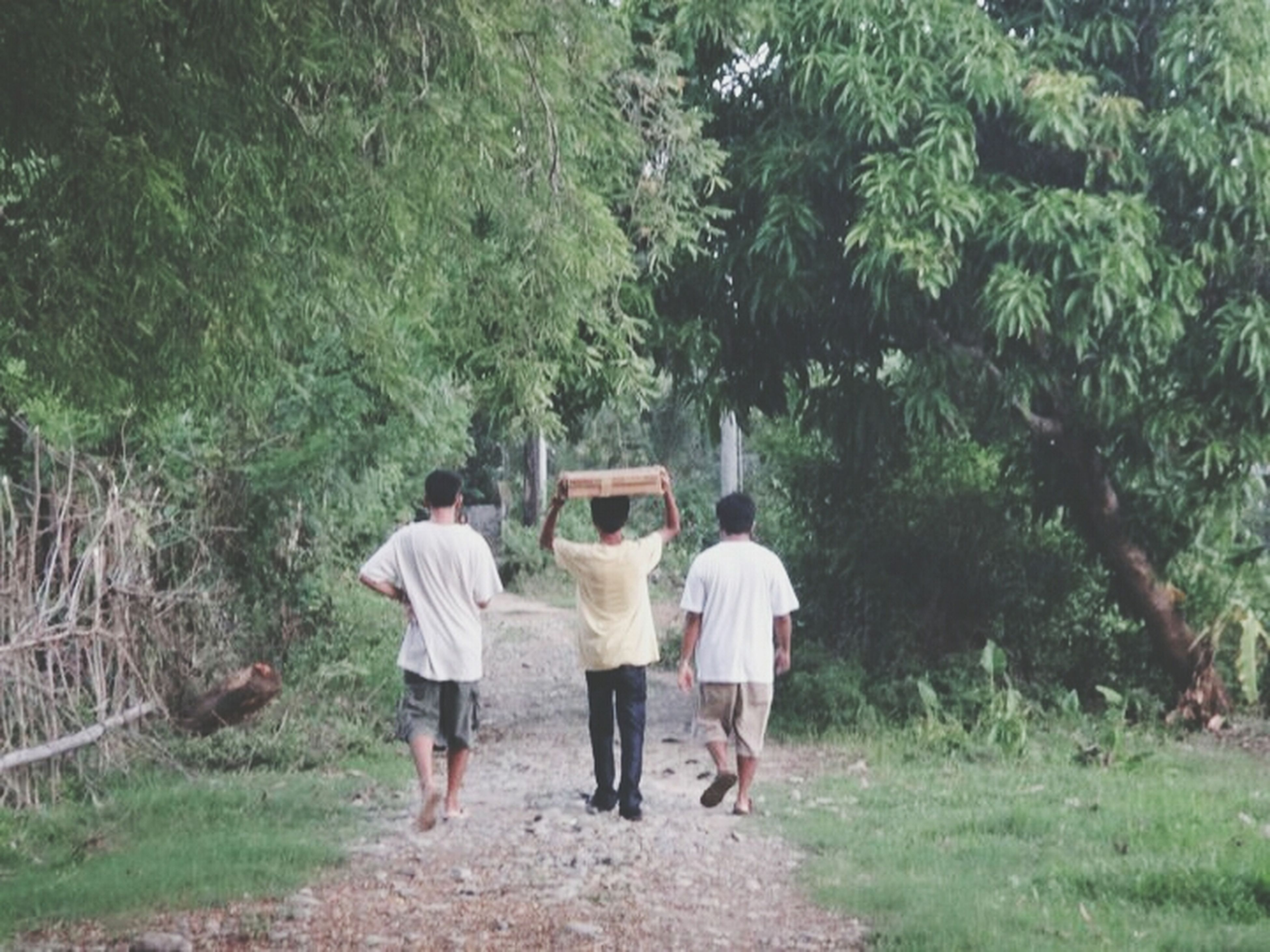 rear view, lifestyles, men, full length, togetherness, leisure activity, walking, person, bonding, casual clothing, tree, love, friendship, the way forward, holding hands, nature, growth