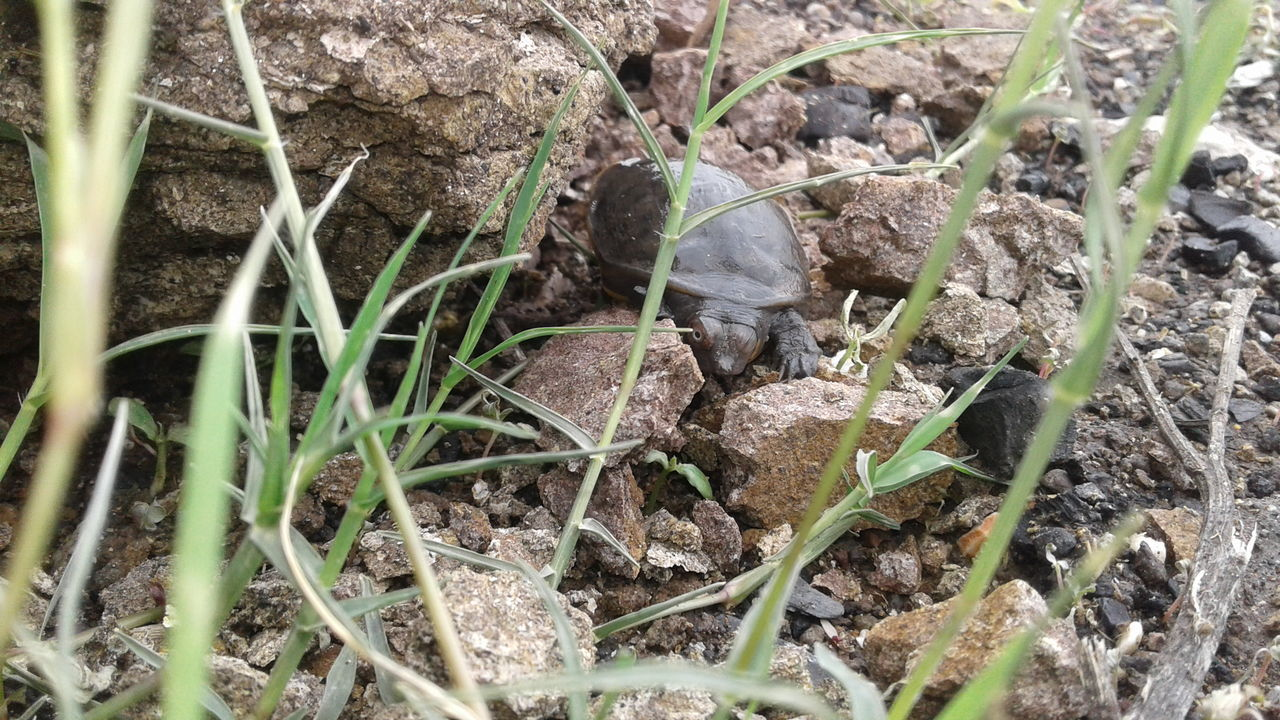 Nature Day No People Outdoors Backgrounds Full Frame Grass Beauty In Nature Baby Tortoise