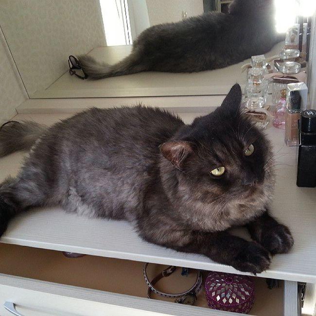 Мой супер наглый , мега недовольный , самый сладкий котяра мау cat Бусек love angel кот котэ