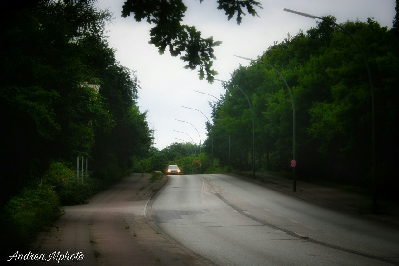 tree, transportation, road, the way forward, nature, day, growth, no people, sky, plant, outdoors, beauty in nature