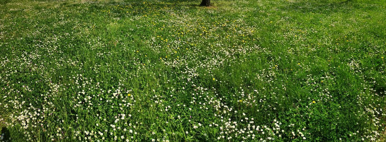 Home Daisy Spring Flowers Flowers Field Green Springtime Spring Urban Nature Nature_collection
