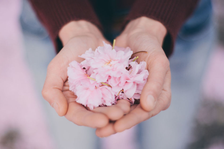 Cherish the moment Beauty In Nature Cherry Blossoms Close-up Flower Focus On Foreground Fragility Freshness Hands Cupped Holding Human Body Part Human Hand Nature One Person Outdoors Pink Color Real People TCPM