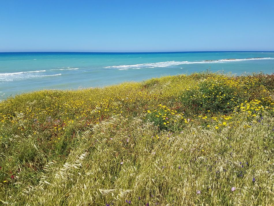 Sea Beach Horizon Over Water Water Nature Scenics Sky Beauty In Nature Travel Destinations Outdoors Clear Sky Vacations Silence Of Nature Landscape Landscape_Collection Landscape Photography EyeEmNewHere Springtime Flower Collection Art Is Everywhere Week On Eyeem Yellow Flower