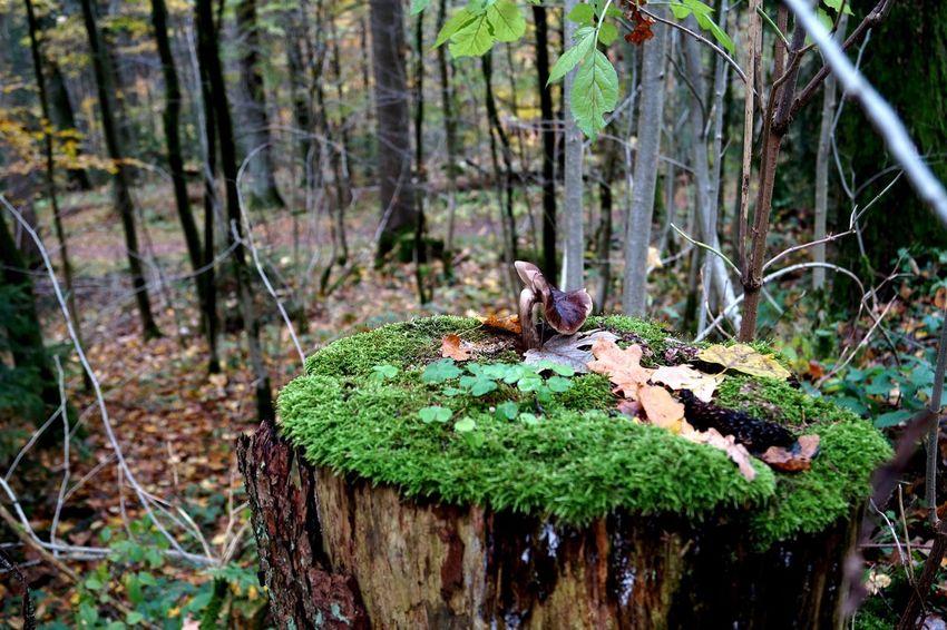 Lucky mushroom Autumn Enjoying Life Grass Green Color Growth Hanging Around Hello World Nature No People Outdoors Taking Photos Tree Wood