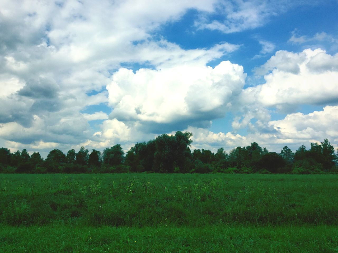field, landscape, sky, nature, tree, beauty in nature, grass, tranquility, agriculture, no people, cloud - sky, scenics, tranquil scene, growth, outdoors, day