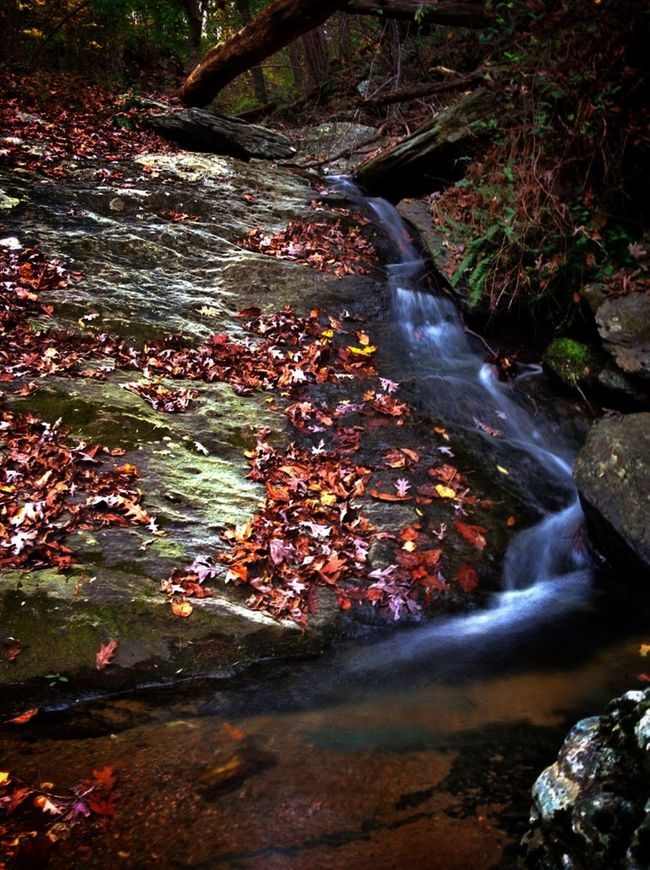 Raven Falls dressed in her fall colours... Nature_collection Colors Of Autumn EyeEmBestPics Water_collection