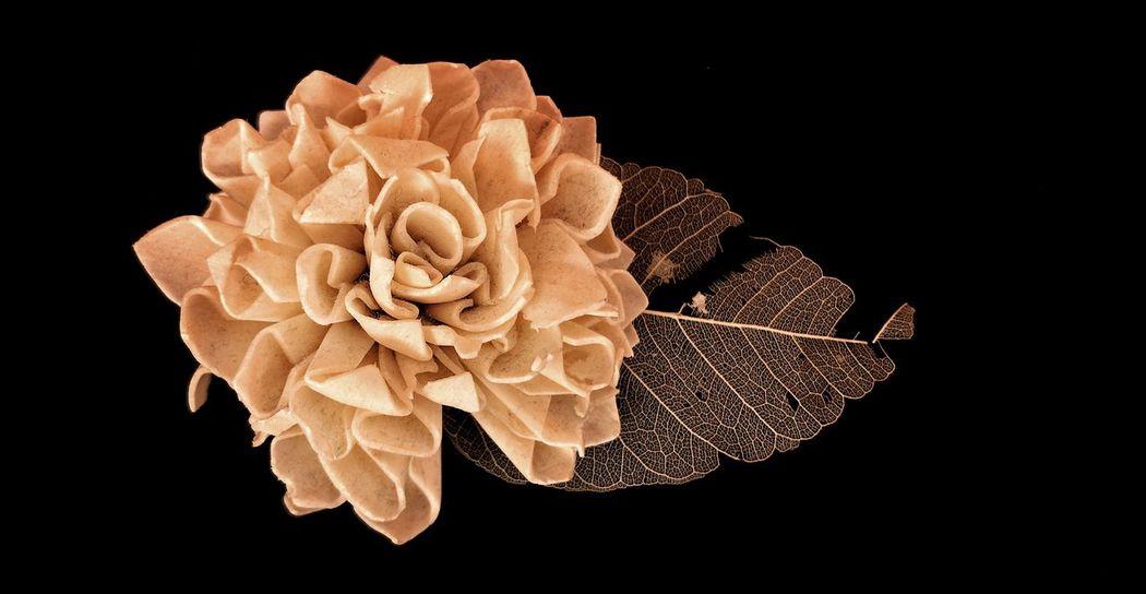 Black Background Studio Shot Flower Petal No People Close-up Nature Fragility Flower Head Day