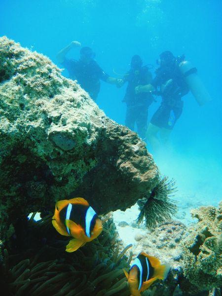 Diving Fish Beautiful Corals