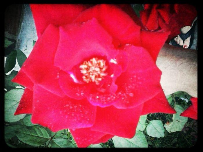 Flowers Picflow