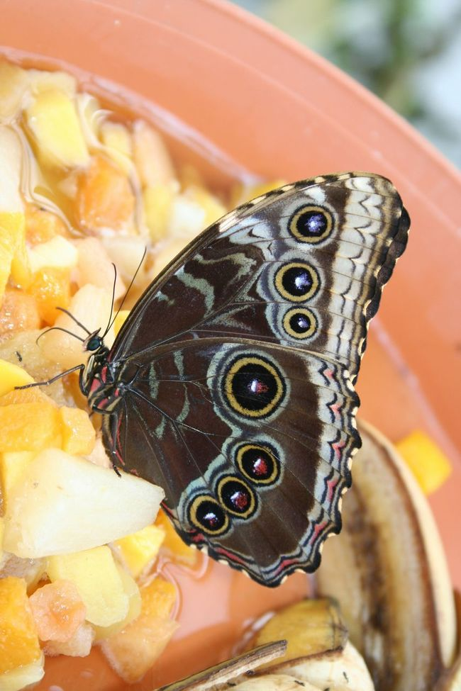 My_butterfly_collection Inmygarden Taking Photos ForTheLoveOfPhotography Most Stunning Shot EyeEmBestPics BeautyAndMadness