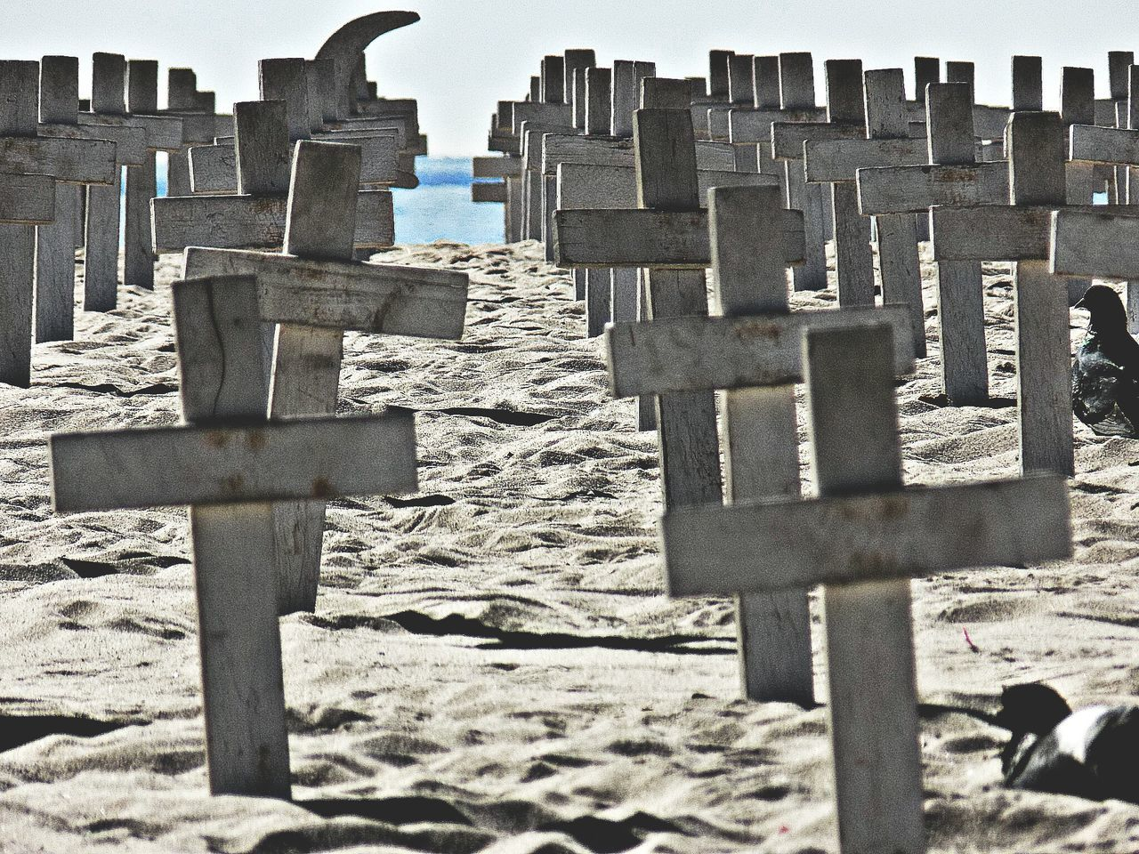 Beautiful stock photos of veteran's day, Armed Forces, Beach, Cemetery, Clear Sky