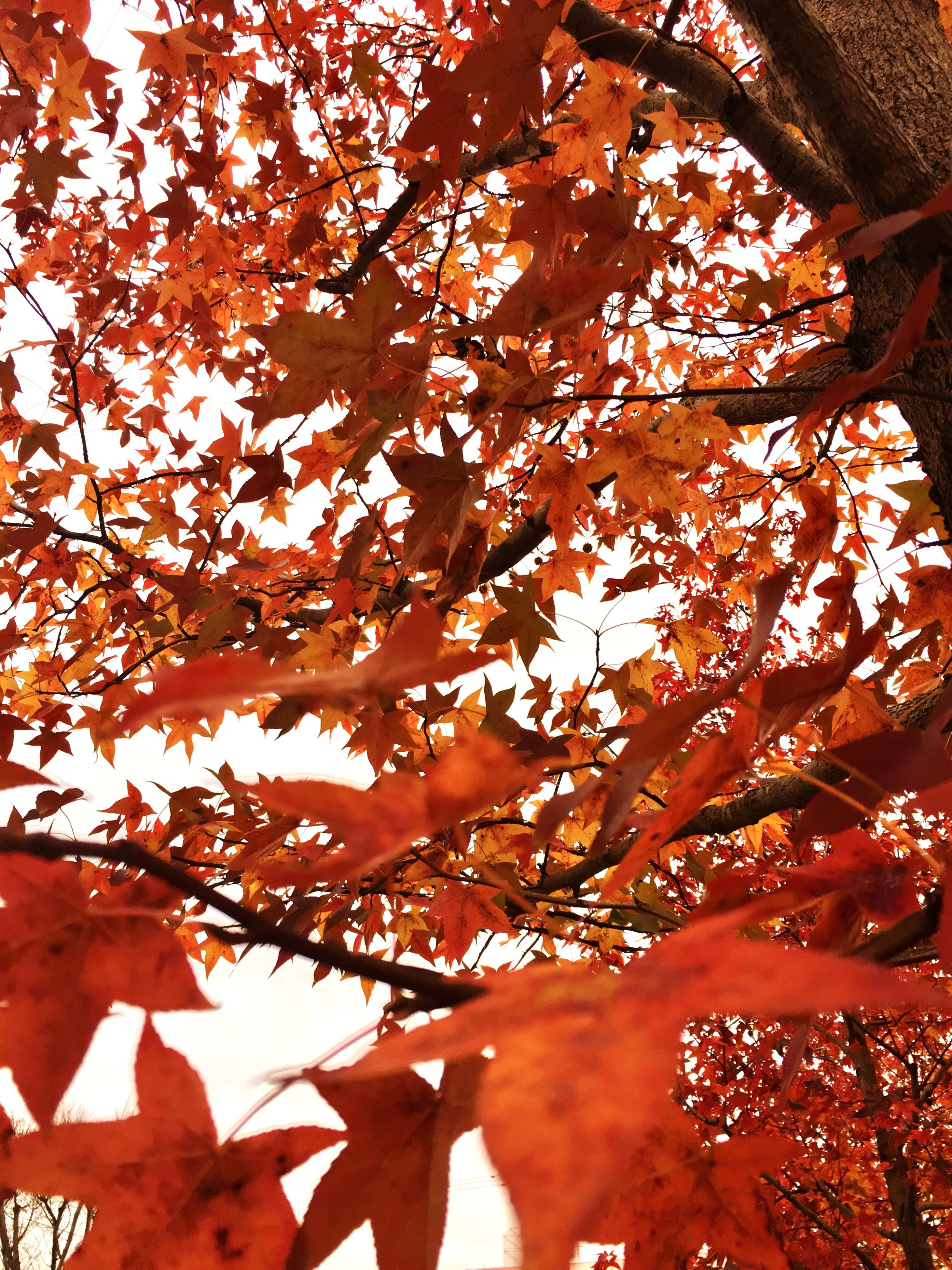 orange color, nature, no people, outdoors, beauty in nature, backgrounds, day, tree, sky