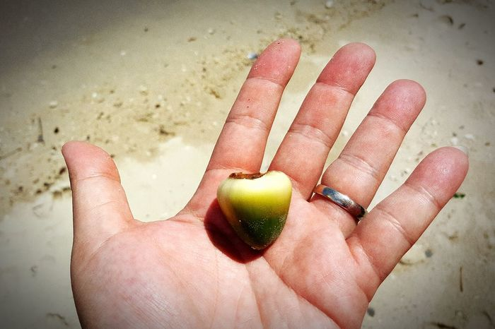 Adults Only Human Body Part Human Hand One Person Beach Fruit Sand Leisure Activity Adult People Close-up Palm Day Water Outdoors One Man Only Small Coconut Ring EyeEmNewHere