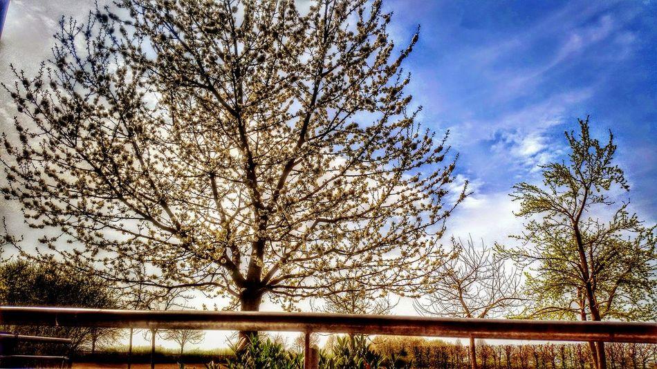 Baum 🌳🌲 Baum Let's Do It Chic! Ein Baum