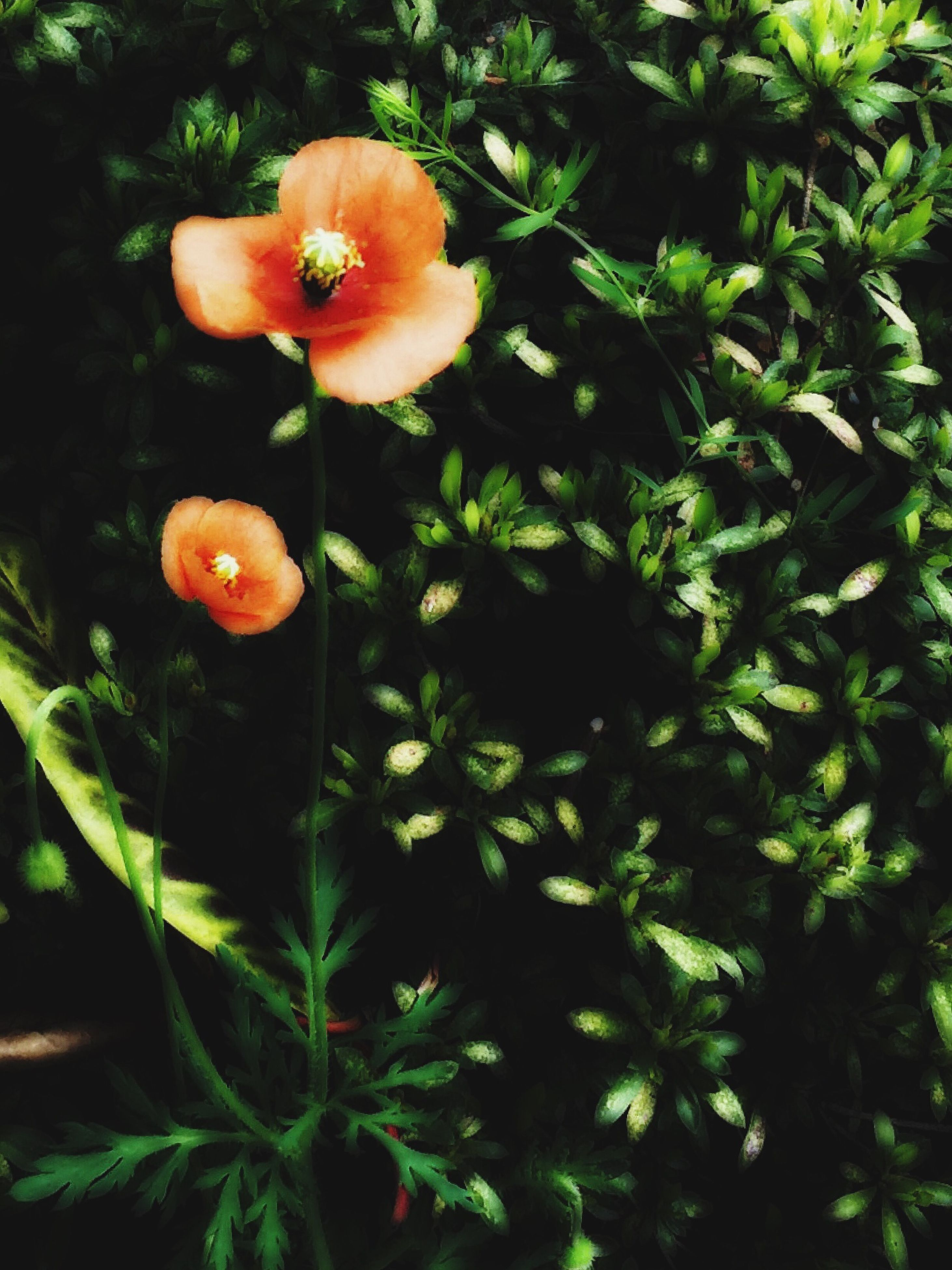 flower, freshness, growth, petal, fragility, beauty in nature, flower head, plant, nature, orange color, blooming, leaf, green color, close-up, in bloom, no people, park - man made space, outdoors, red, sunlight