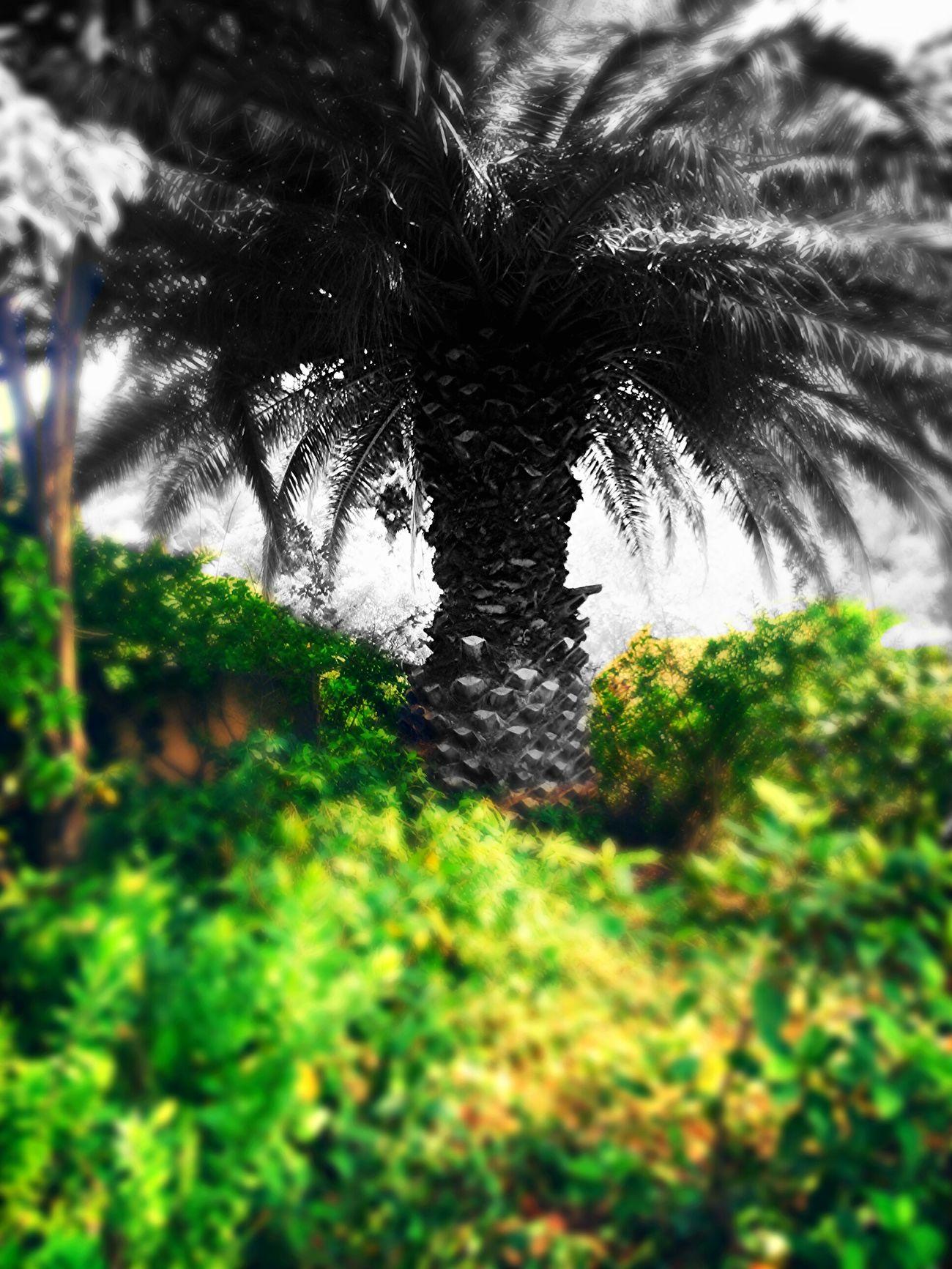 Depuis le parc du Mugel. Beauty Green Hello World Three