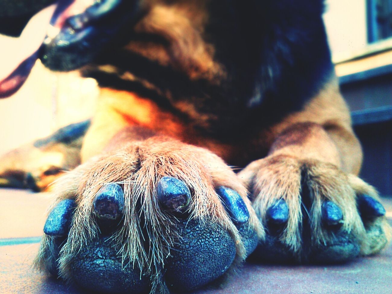 Dogs Big Foot Get Closer