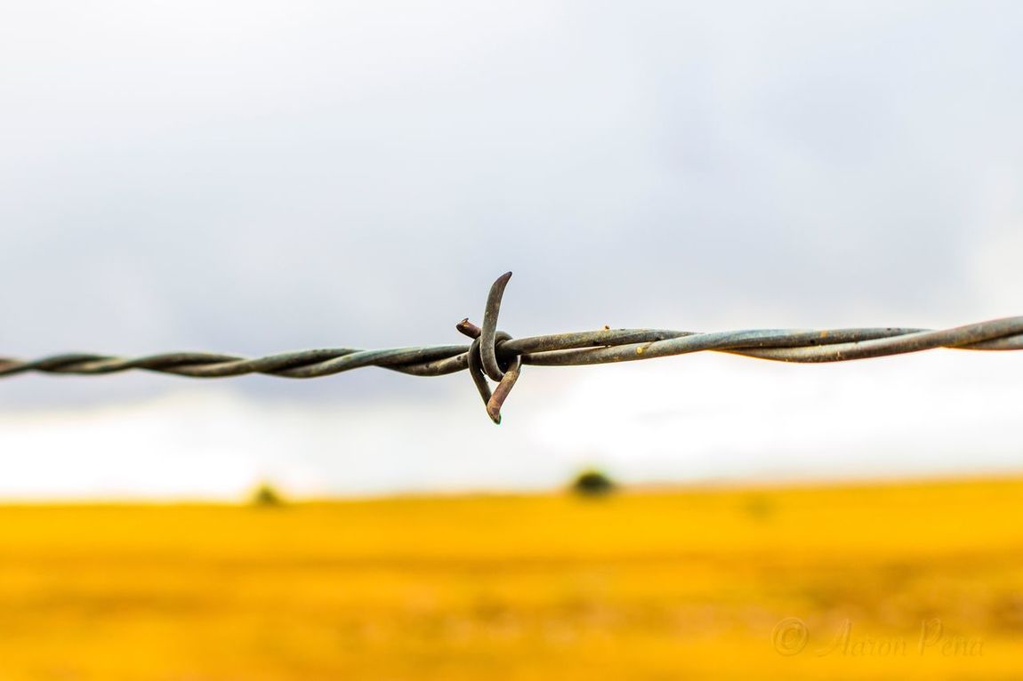 Barbed Wire Security Fence Protection Razor Wire Focus On Foreground Safety Close-up Sky Metal Exclusion Outdoors No People Spiral Day Rusty Forbidden Barricade Security System
