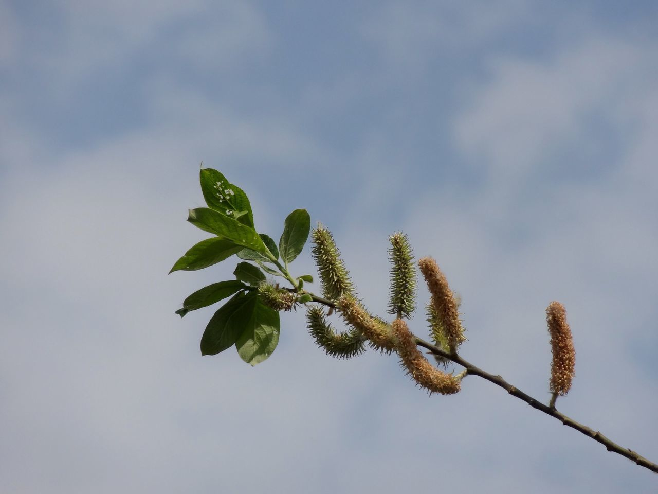 Close-Up Of Plant Against Sky
