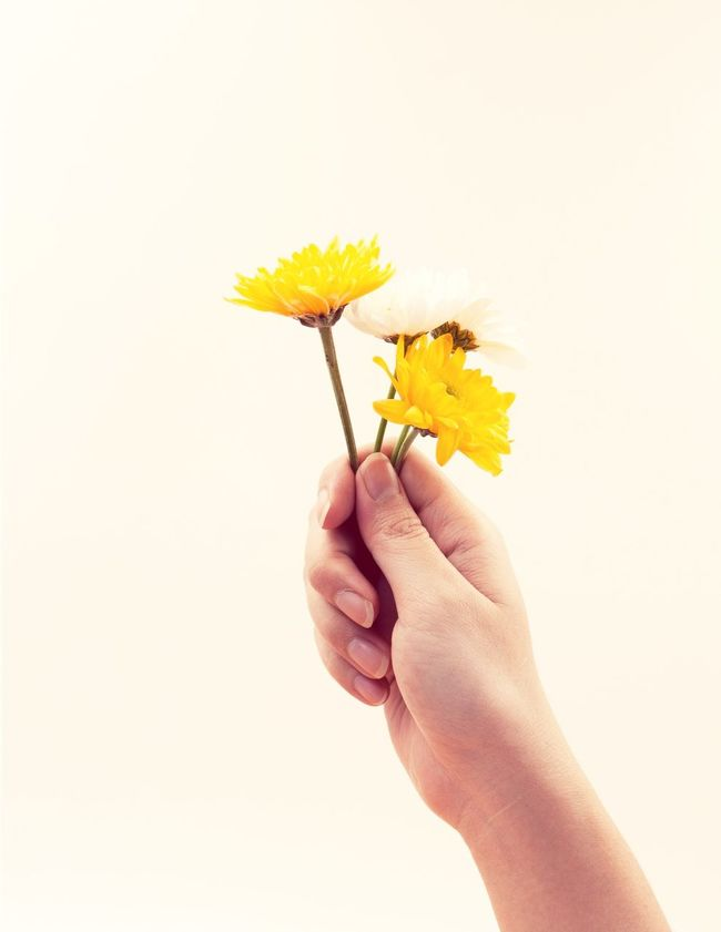 Bouquet of yellow flowers in hand woman Flowers Flower Bouquet Yellow Yellow Flower Hand Woman Open Edit