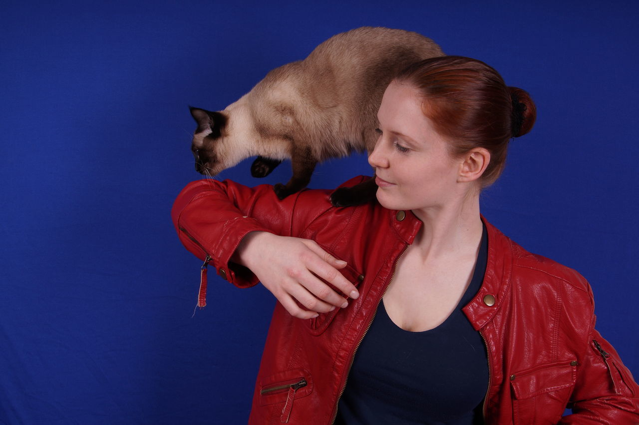pets, one animal, animal themes, domestic cat, domestic animals, red, pet owner, young adult, siamese cat, young women, mammal, feline, love, blue, real people, lifestyles, one person, bonding, standing, studio shot, friendship, indoors, sky, day, people