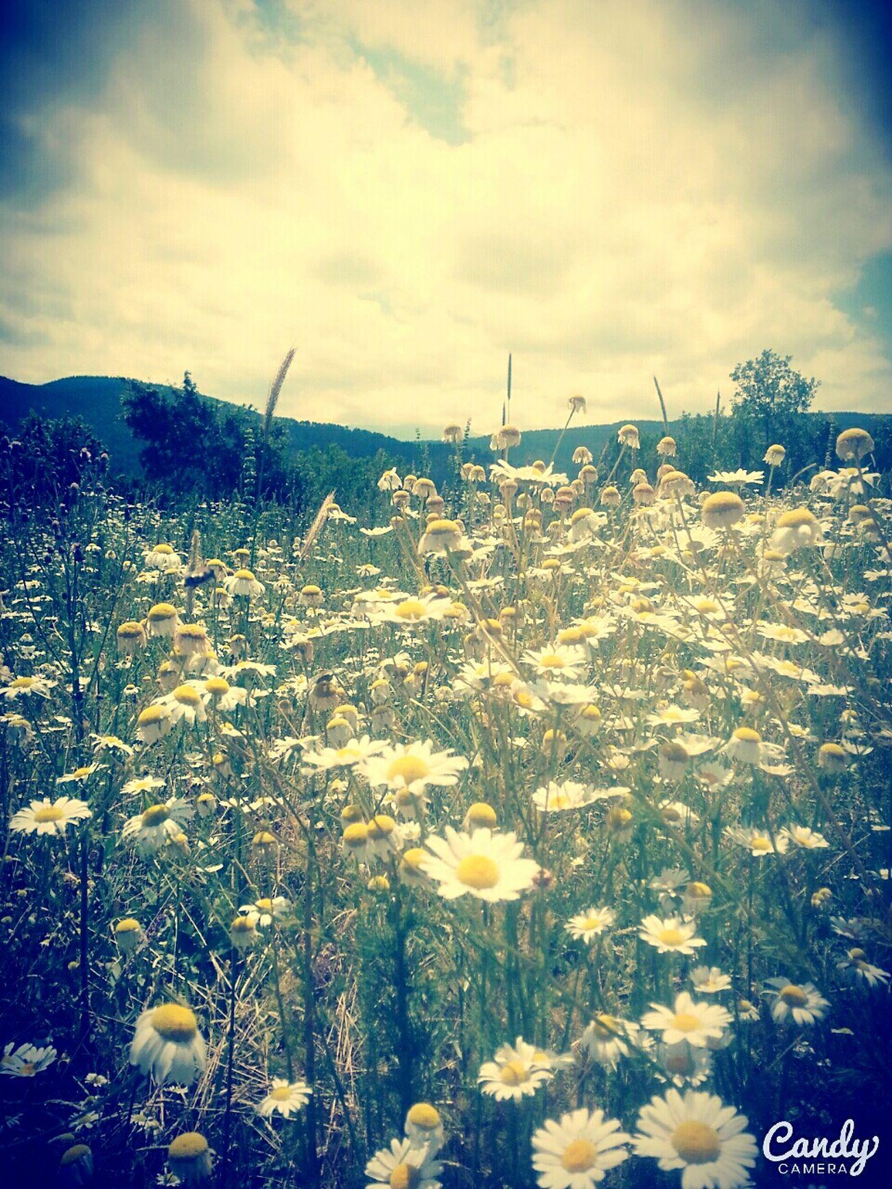 Hi! HelloEyeEm Helloworld Sun Sunshine Flowers Mountain ılgaz