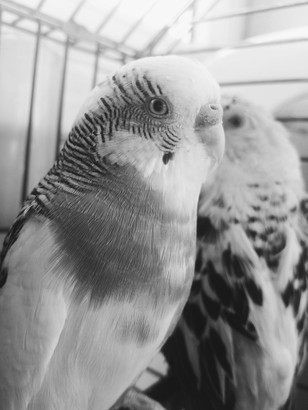 Bird No People Close-up Animal Themes Peaceful Moment Birds_collection Birds Of EyeEm  Birds🐦⛅ Animal Eye Animal Head  Black Black And White Animal EyeEm Nature Lover Sunlight And Shade Taking Photos Photography Bird Photography Lights And Shadows Bnw_collection Cute Hi!