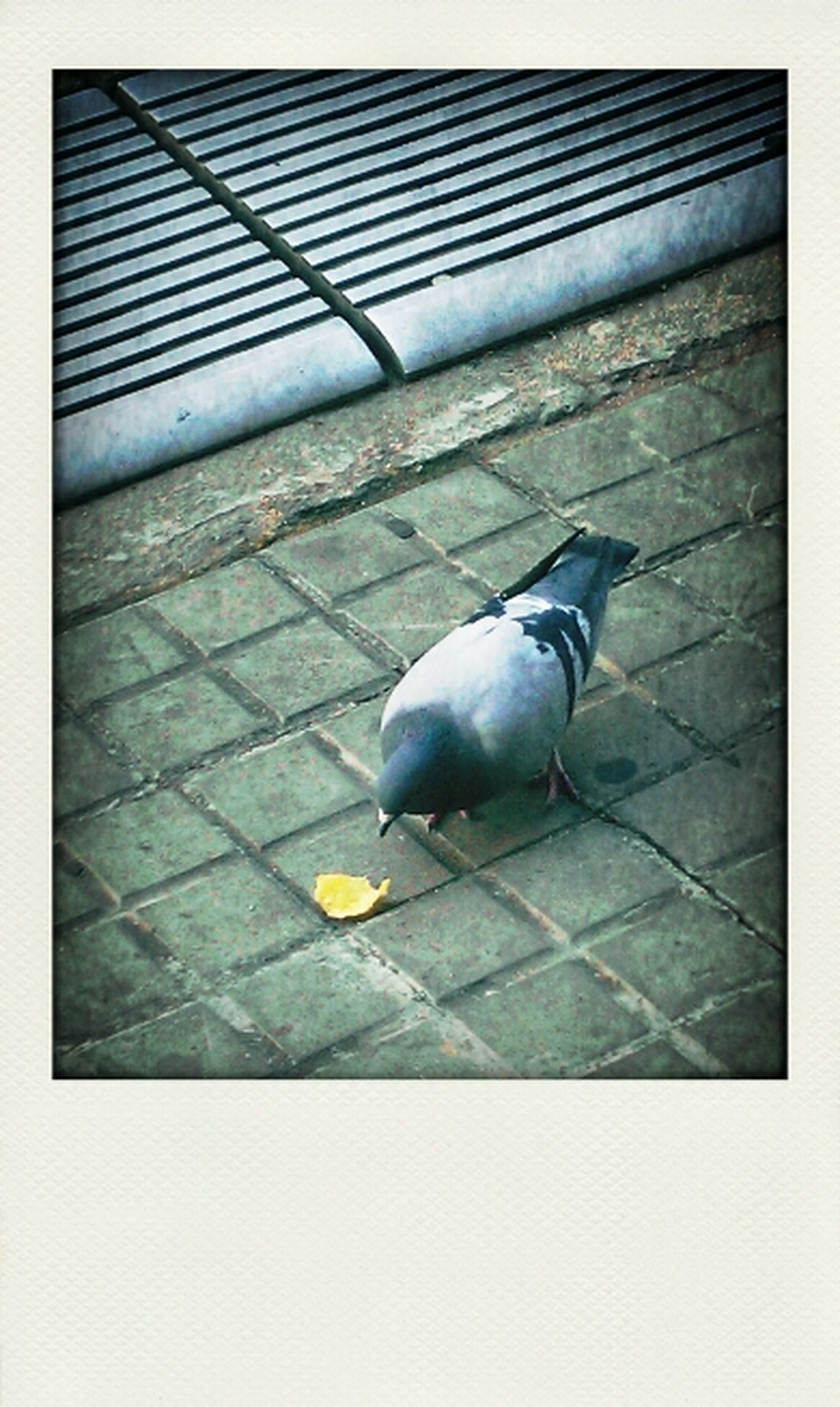 animal themes, bird, one animal, transfer print, wildlife, animals in the wild, pigeon, auto post production filter, high angle view, shadow, sunlight, full length, seagull, outdoors, day, no people, perching, zoology, street, side view