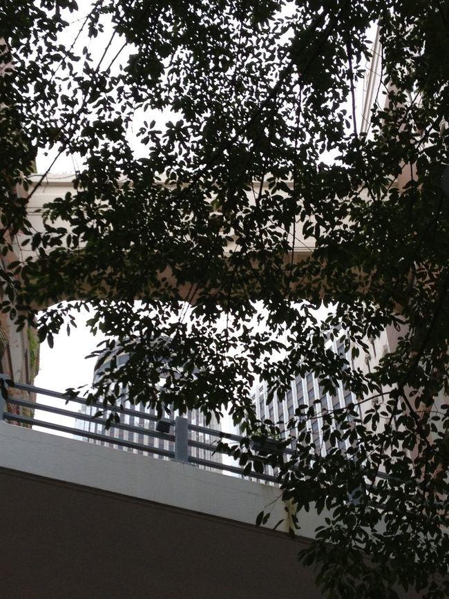 Green life & city