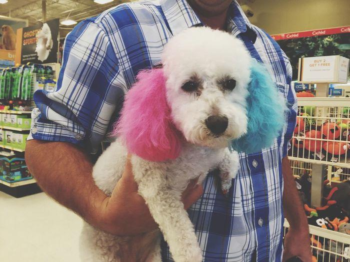 Dog Harlyquinn Pets Petsmart Pet Photography  Pet Grooming
