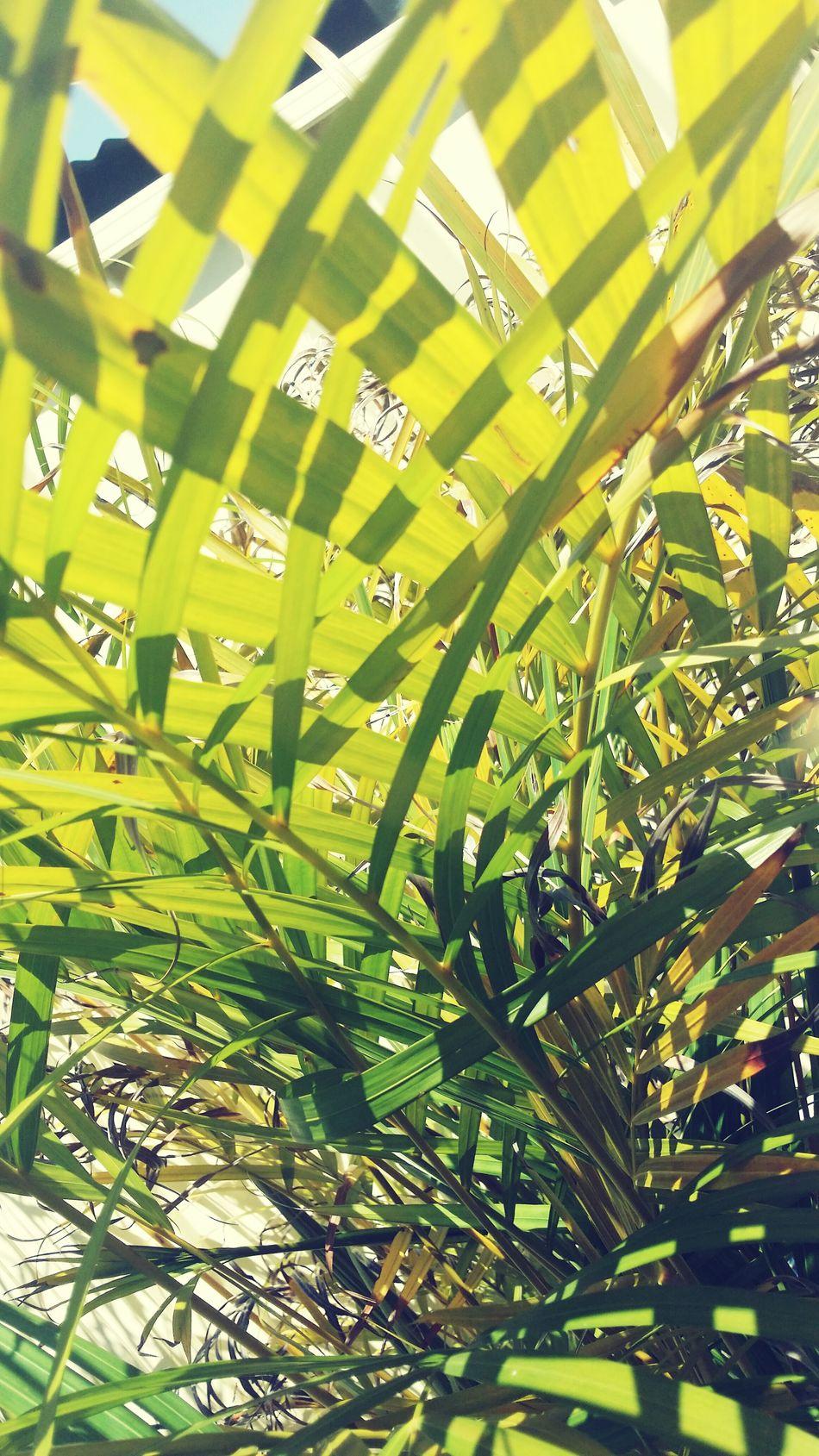 FERN ANYBODY? Summer2015 Beauitful Day Treehugger Sydney, Australia Tweettweet