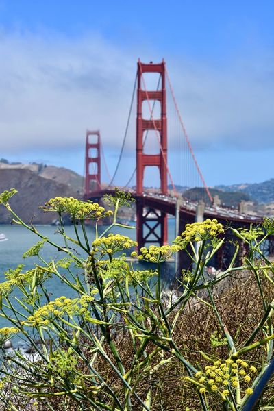 Plant Nature No People Built Structure Outdoors Sky Beauty In Nature Suspension Bridge Golden Gate Bridge San Francisco