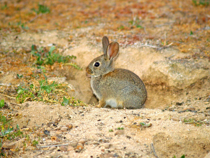 Animal Animal Themes Animal Wildlife Animals In The Wild Cave Close-up Eating Field Front View Full Length Grass Insect Land Looking At Camera Mammal Nature No People One Animal Oryctolagus Oryctolagus Cuniculus Outdoors Rabbit Rabbits Rearing Up Standing