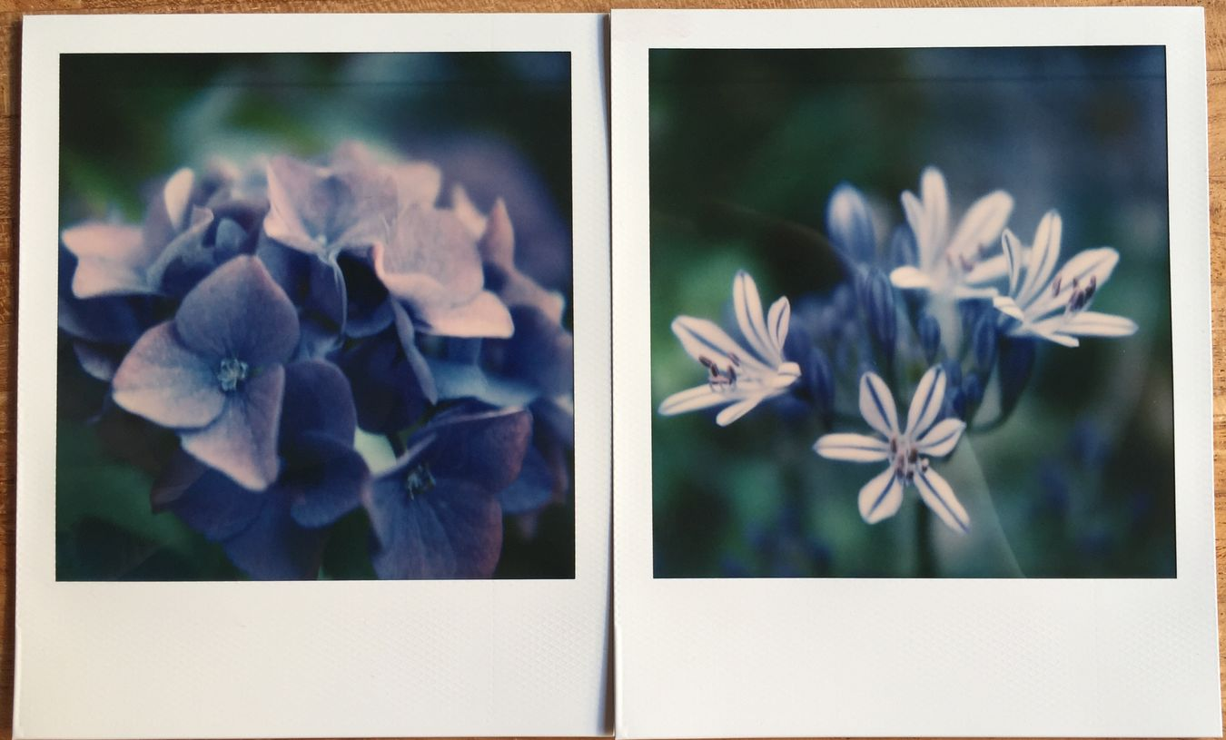 Diptych in blue Filmphotography Instant Photography Macro Photography Polaroid SX70 Flowers Nature Photography