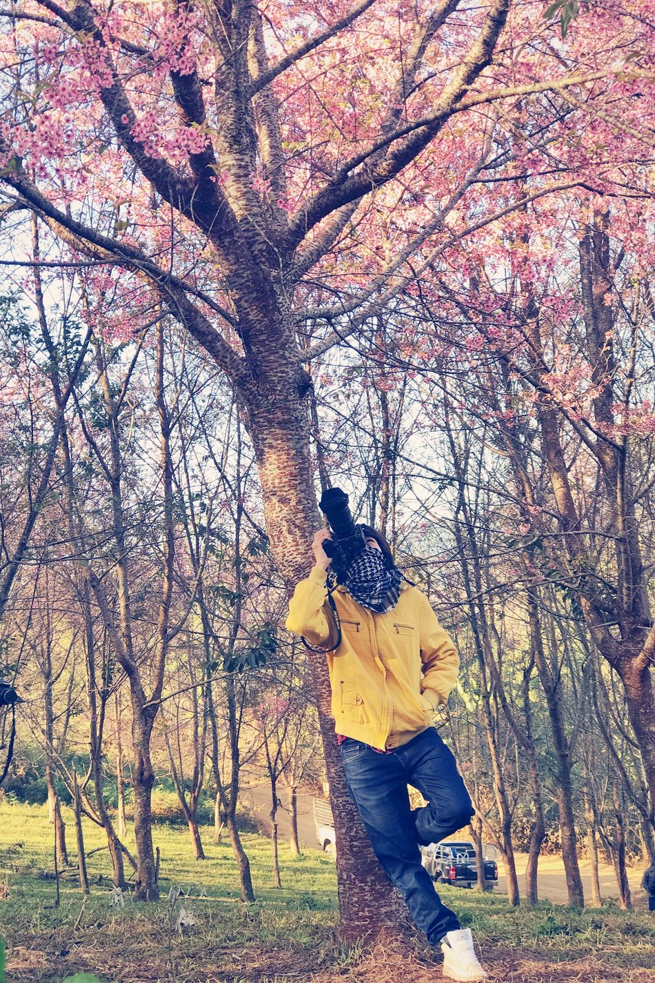EyeEmNewHere Tree One Person Nature Tree Trunk Bare Tree Branch Outdoors Beauty In Nature Adult People Sakura Pink Cherry Blossoms Camera Taking Photos Photographer Travel Vintage Forest Thailand Blossom Winter Lifestyles Relaxing Miles Away Uniqueness Lieblingsteil