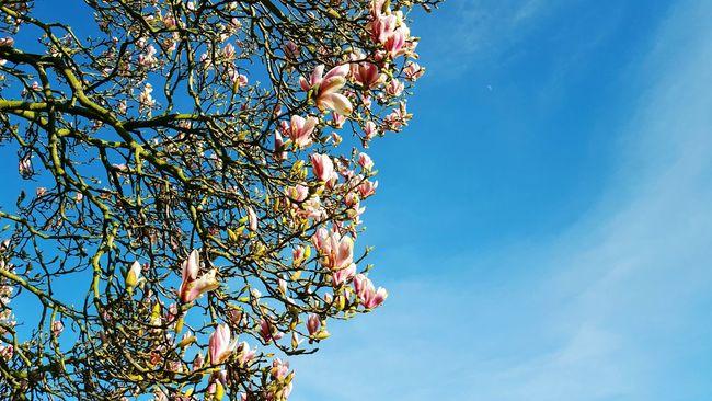spring is coming 😍 petals buds Blue Sky Flowers Beautiful Nature EyeEm Gallery
