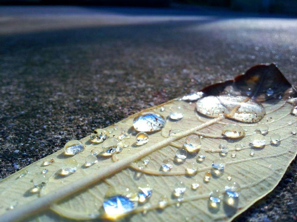 Rain Stree Photography すれすれ