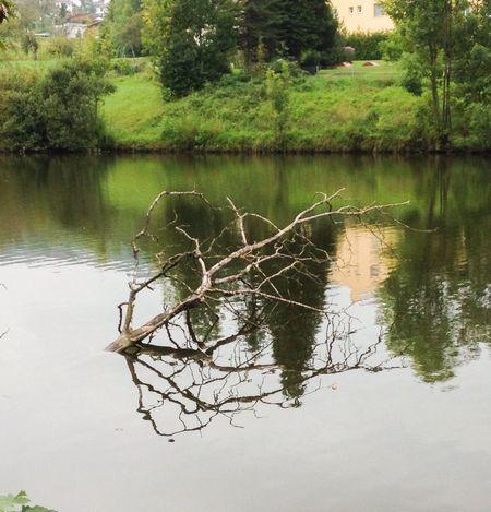 Nature Water Reflection Urban Landscape