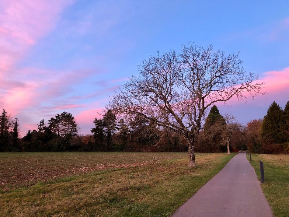 Tree Road Sky Nature Bare Tree The Way Forward Tranquility Scenics Outdoors Beauty In Nature No People Tranquil Scene Landscape Cloud - Sky Day Grass Geneva
