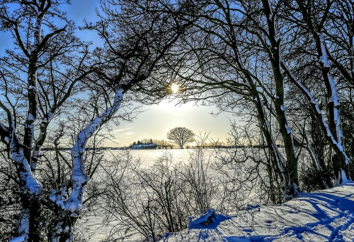 EyeEmNewHere Framed View Low Angle View Nature Sky No People Tree Day Blue Beauty In Nature Outdoors Winter Cold Temperature Snow Bare Tree Branch