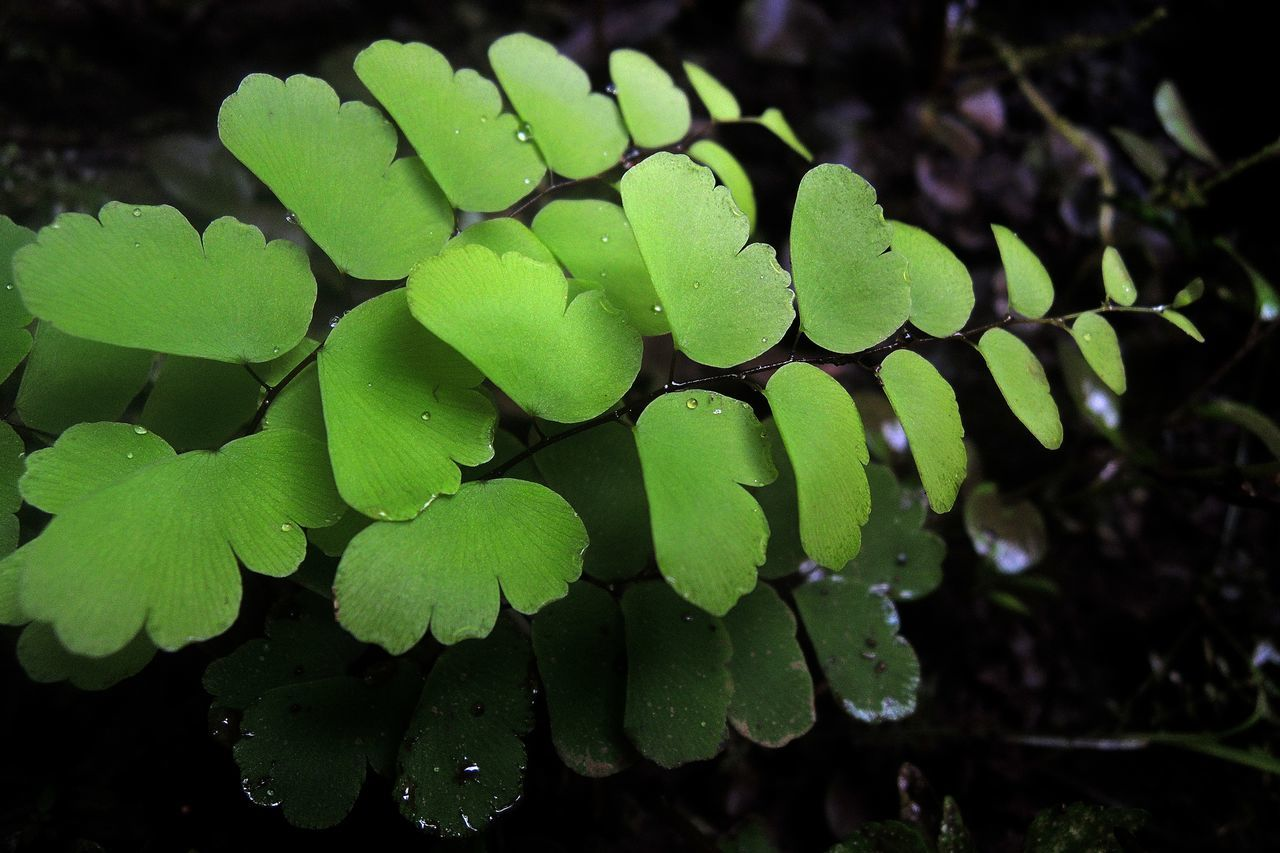 green color, leaf, growth, freshness, drop, nature, close-up, beauty in nature, water, no people, plant, outdoors, fragility, day