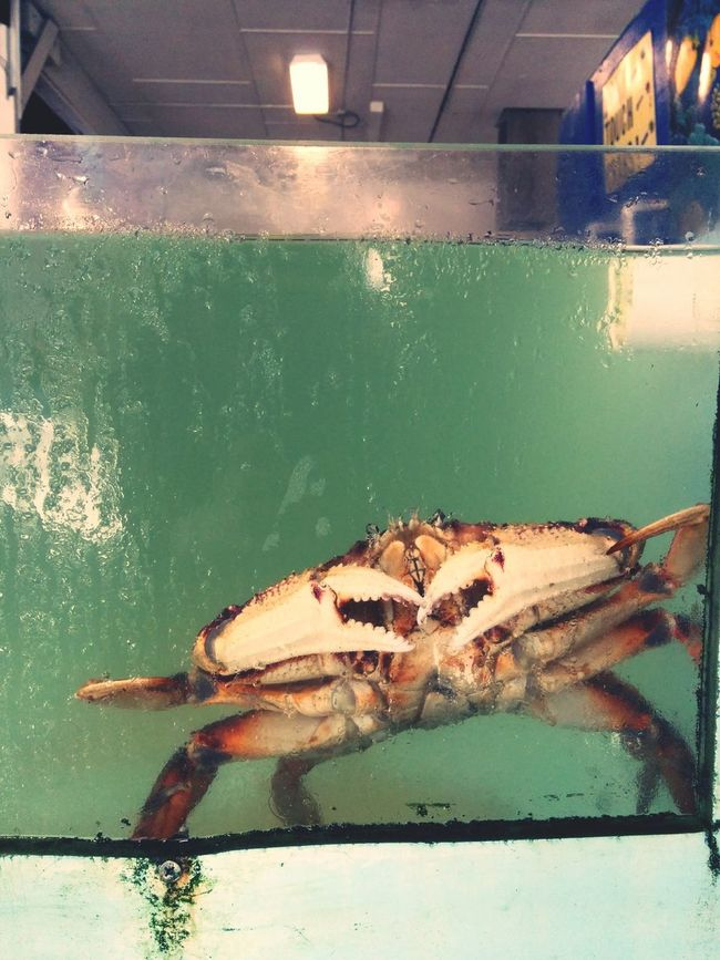 Help! Dungeness Crab Delicious Foodie