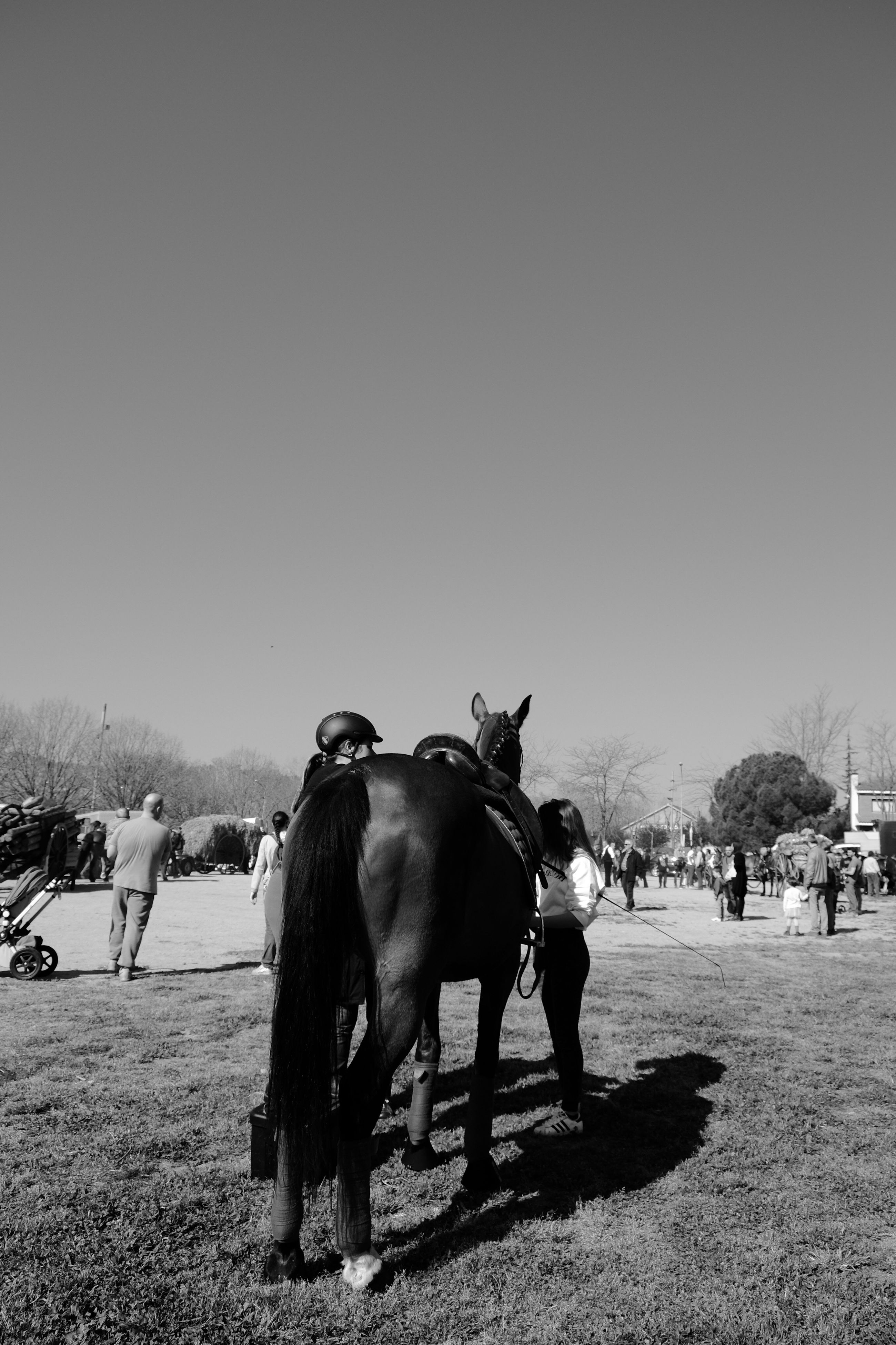 horse, animal themes, domestic animals, working animal, mammal, one animal, clear sky, herbivorous, outdoors, sky, day, livestock, hoofed mammal, real people, tree, horse racing