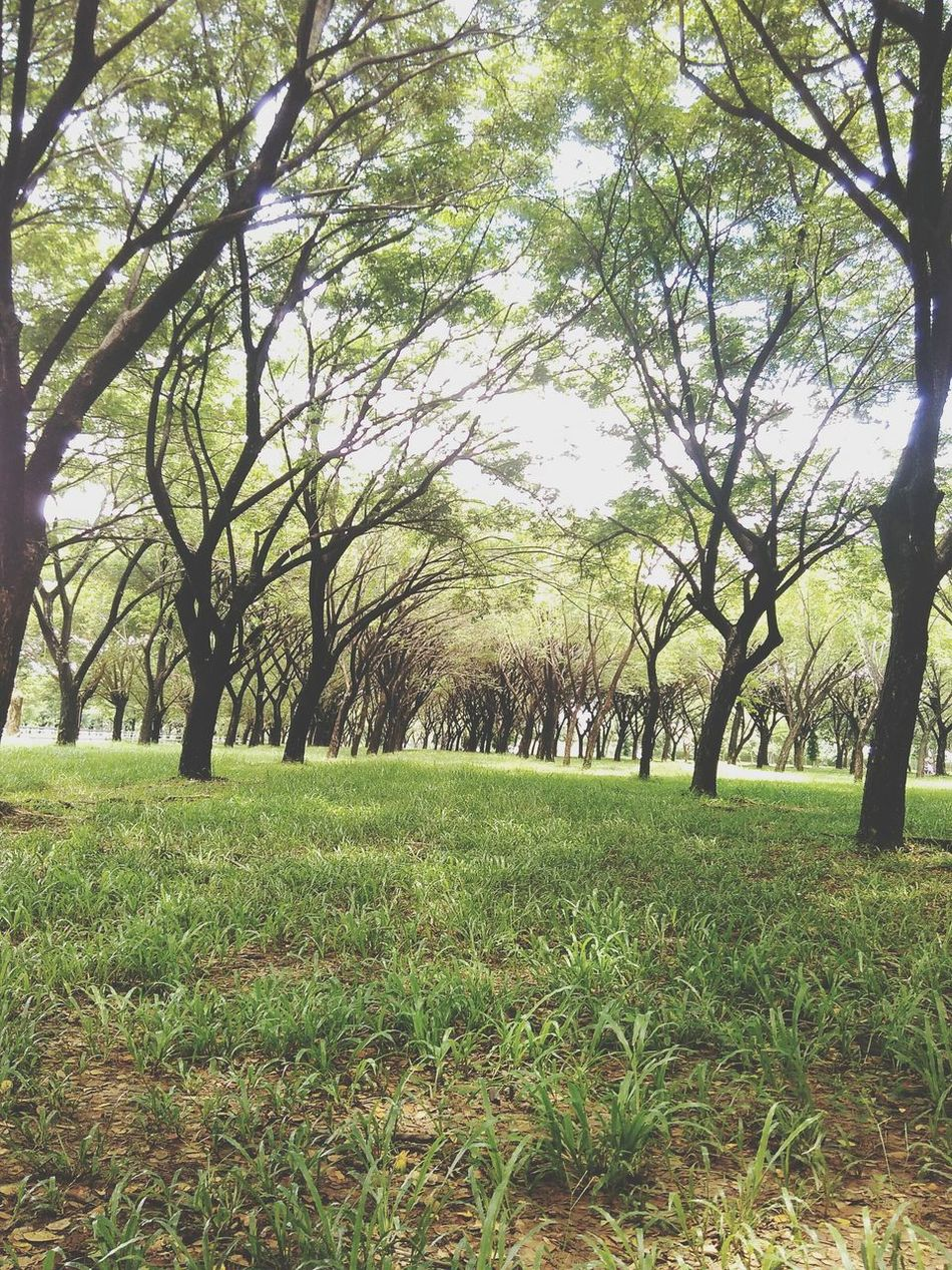 Tree Grass Growth Nature Green Color Beauty In Nature No People Park Outdoors Field Tranquil Scene Tranquility Landscape Branch Day Scenics Sky Say Hello Lush - Description